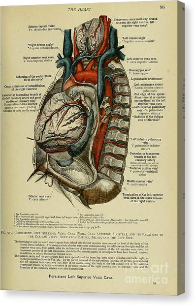 Anatomy Human Body Old Anatomical 76 Canvas Print