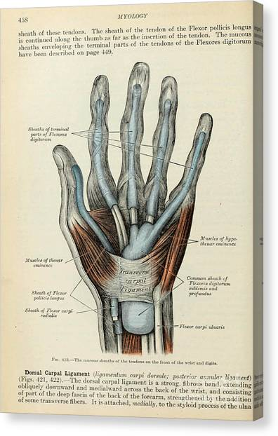 Anatomy Human Body Old Anatomical 83 Canvas Print
