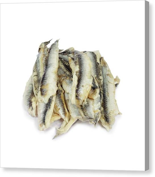 Fillet Canvas Print - Anchovies by Geoff Kidd