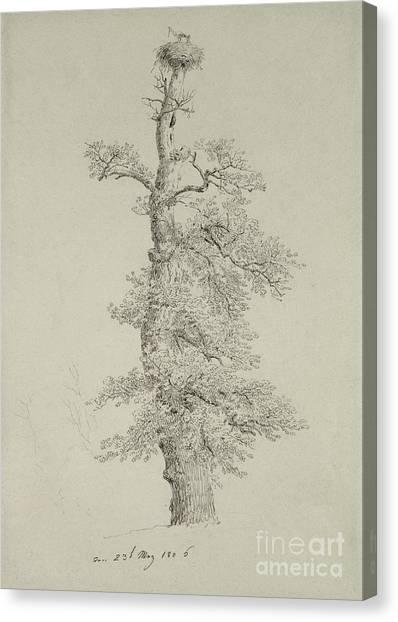 Storks Canvas Print - Ancient Oak Tree With A Storks Nest by Caspar David Friedrich