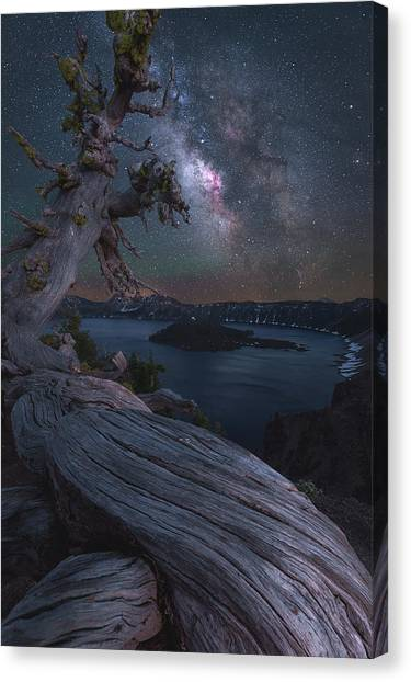 Survival Canvas Print - Ancient Roots Of Crater Lake by Steve Schwindt
