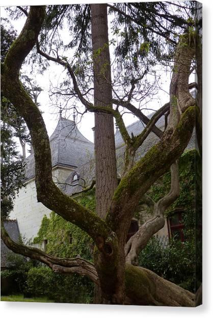 Ancient Tree At Chateau De Chenonceau Canvas Print