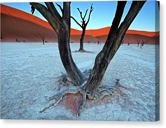 Dunes Canvas Print - Ancient Trees In The Vlei by Trevor Cole