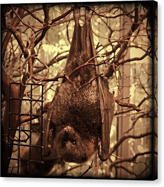 Bat Canvas Print - And A Spooky Edit, Just For Kicks. Love by Michele Beere