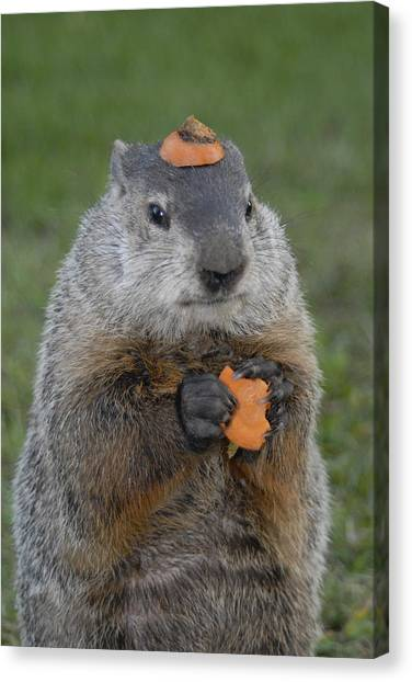Groundhogs Canvas Print - And Have You Looked In The Mirror Lately by Paul W Faust -  Impressions of Light