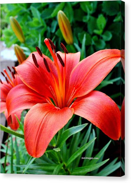 Andrea's Lily Canvas Print