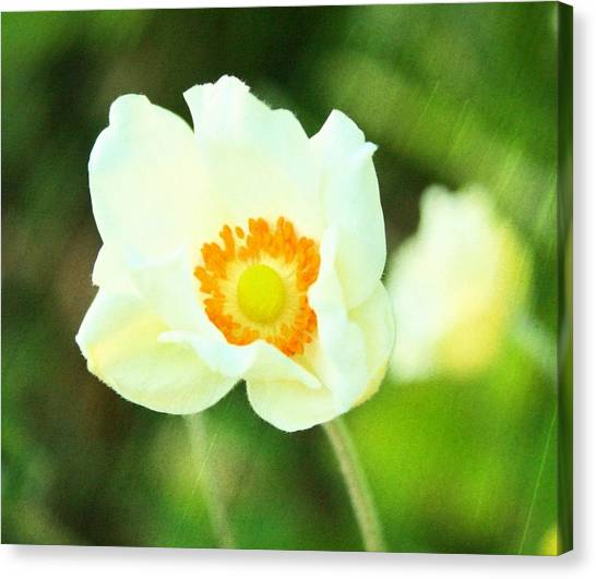 Anemone Canvas Print by Cathie Tyler