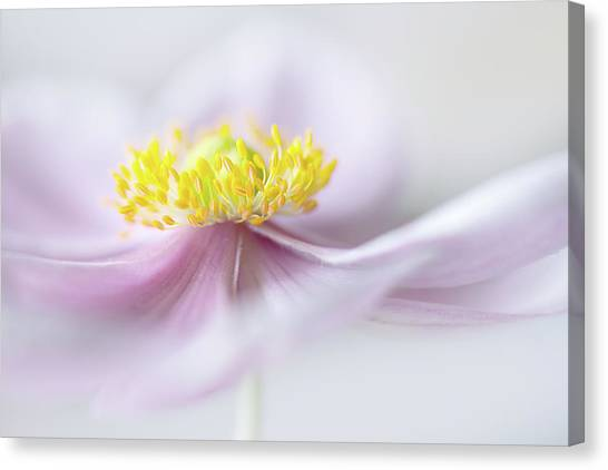 Japanese Gardens Canvas Print - Anemone by Mandy Disher