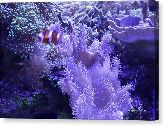 Anemone Starlight Canvas Print