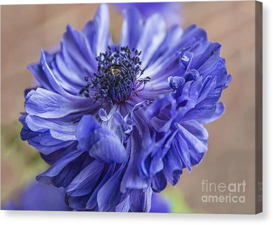 Anemone Blues I Canvas Print