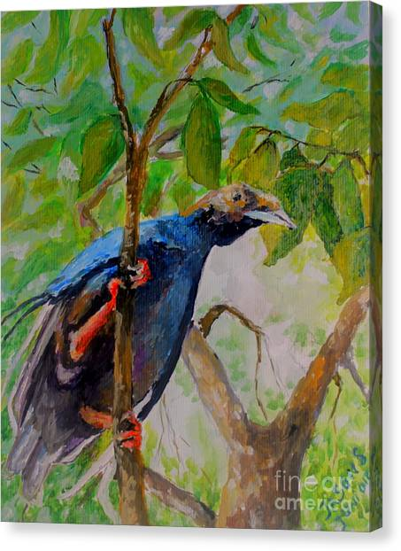Angel Bird Of  North Moluccas Canvas Print