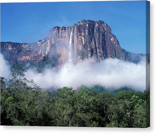 Angel Falls Canvas Print - Angel Falls by David Woodfall Images/science Photo Library