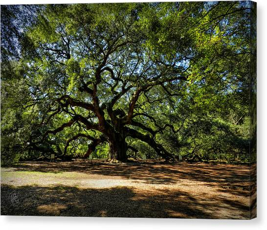 Angel Oak 001 Canvas Print
