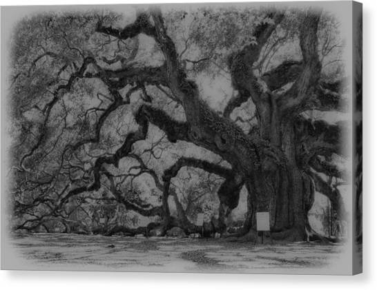 Angel Oak B And W Canvas Print