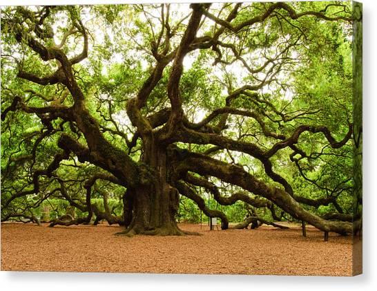Angel Oak Tree 2009 Canvas Print