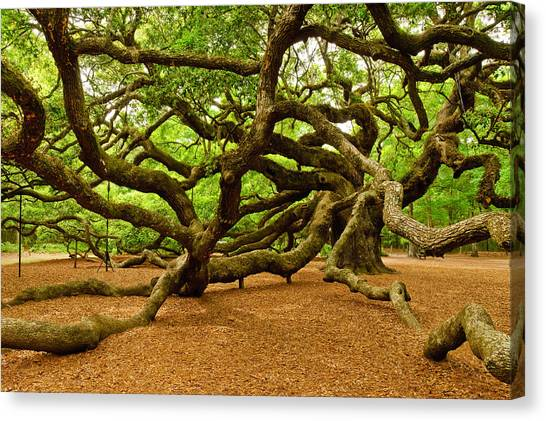 Angel Oak Tree Branches Canvas Print