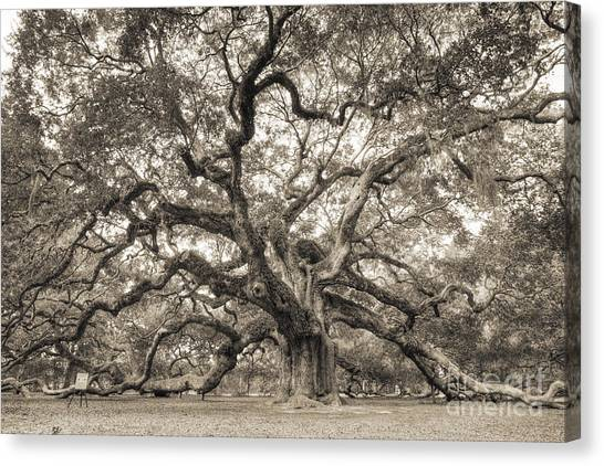 Angel Oak Tree Of Life Sepia Canvas Print