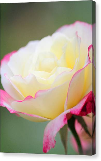 Angel Of Roses Canvas Print