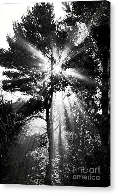 Angel Sun Canvas Print