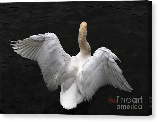 Angel Swan Canvas Print