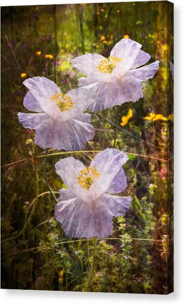 Poppys Canvas Print - Angels' Wings by Debra and Dave Vanderlaan