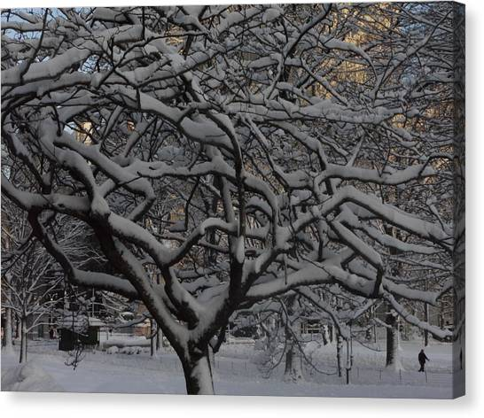 Angular Tree With Snow Canvas Print