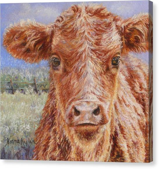 Angus Calf Norman IIi Canvas Print