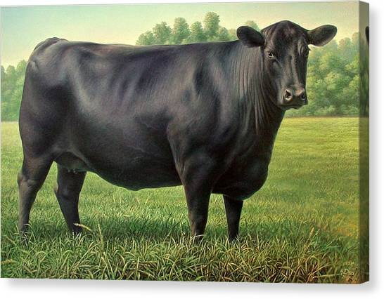 Angus Cow 182m 1 2007 Canvas Print
