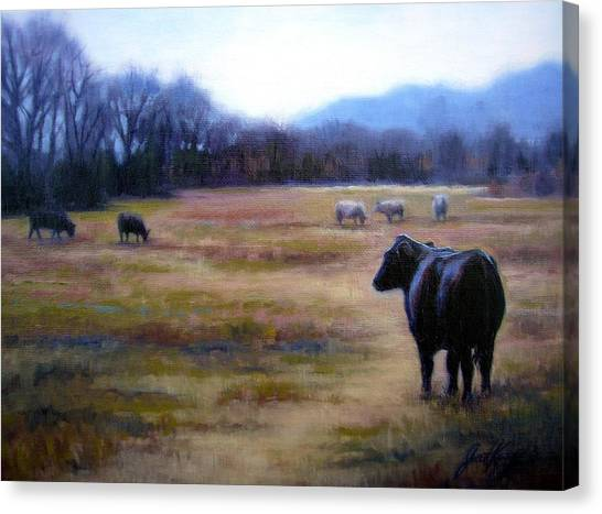 Angus Steer In Franklin Tn Canvas Print