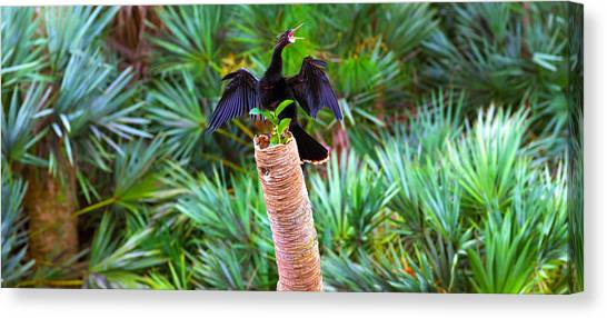 Anhinga Canvas Print - Anhinga Anhinga Anhinga On A Tree by Panoramic Images