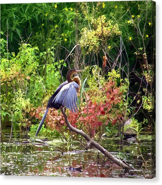 Anhinga Canvas Print - Anhinga In Swamp by John Samsen