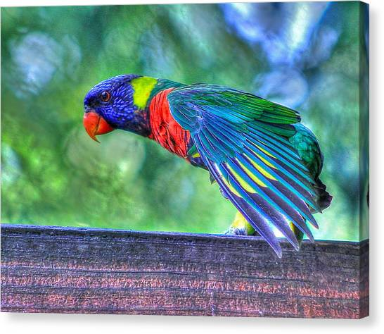Animal 3 Canvas Print