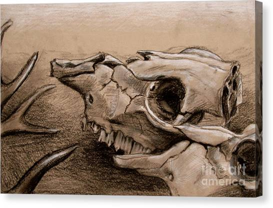 Animal Bones Canvas Print