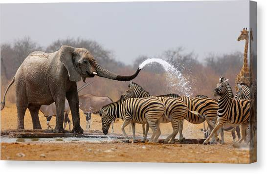 Humour Canvas Print - Animal Humour by Johan Swanepoel