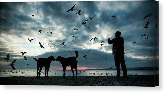Seagulls Canvas Print - Animal Love by Melih Ersahin