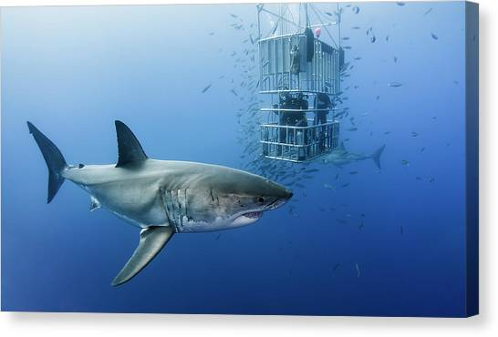 Shark Canvas Print - Animals In Cage by Davide Lopresti