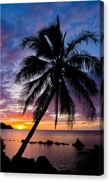 Anini Palm Canvas Print