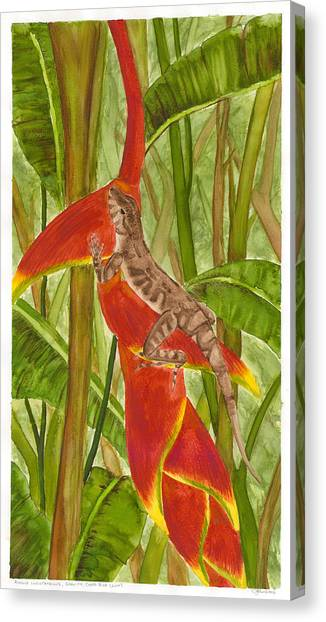 Anolis Humilis Canvas Print