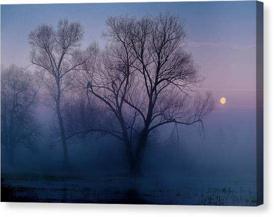 Swamps Canvas Print - Another New Day by Andreas Agazzi