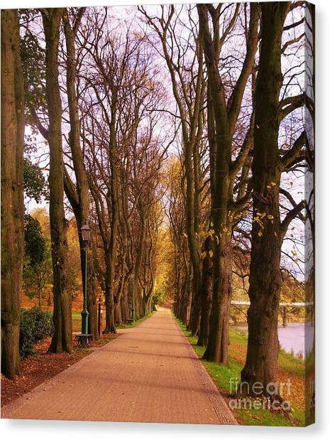 Another View Of The Avenue Of Limes Canvas Print