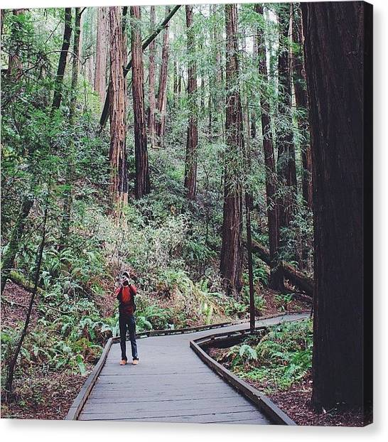 Redwood Forest Canvas Print - Another Way Too Late by Robyn Chell