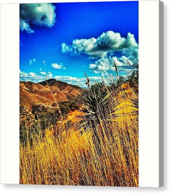Rattlesnakes Canvas Print - #anotherday #anotherhike #hiking The by Ana Borrajo