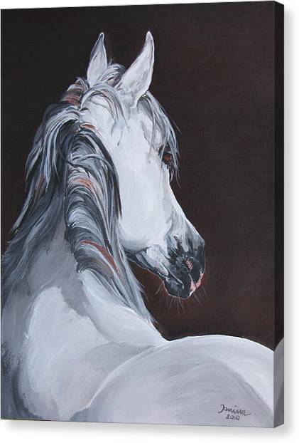 Ansata El Naseri  Canvas Print by Janina  Suuronen