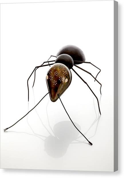 Ants Canvas Print - Ant by Lawrie Simonson