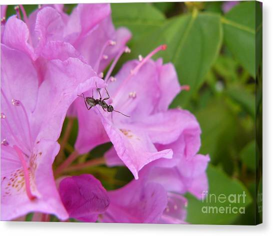 Ant On Flower Canvas Print