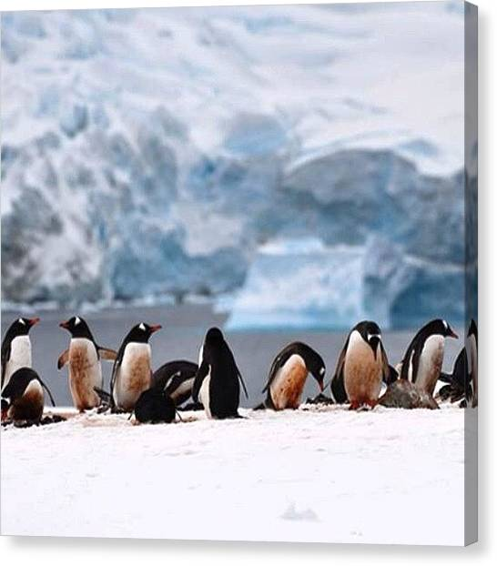 Antarctica Canvas Print - #antarctica #fram #hurtigruten by Pam Kantola