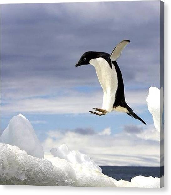 Antarctica Canvas Print - #antarctica by Oscar Lopez