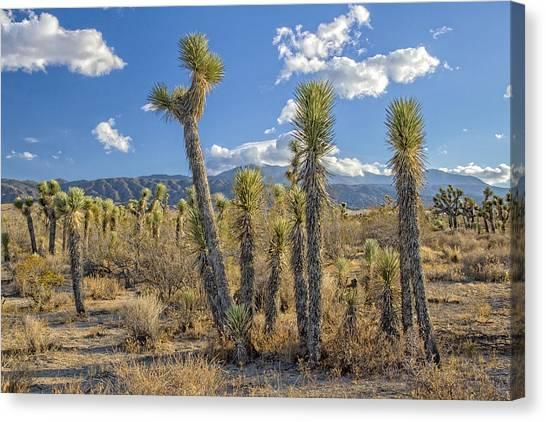 Antelope Valley Joshua Trees 1 Canvas Print