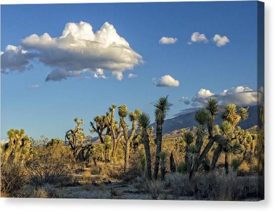 Antelope Valley Joshua Trees 2 Canvas Print
