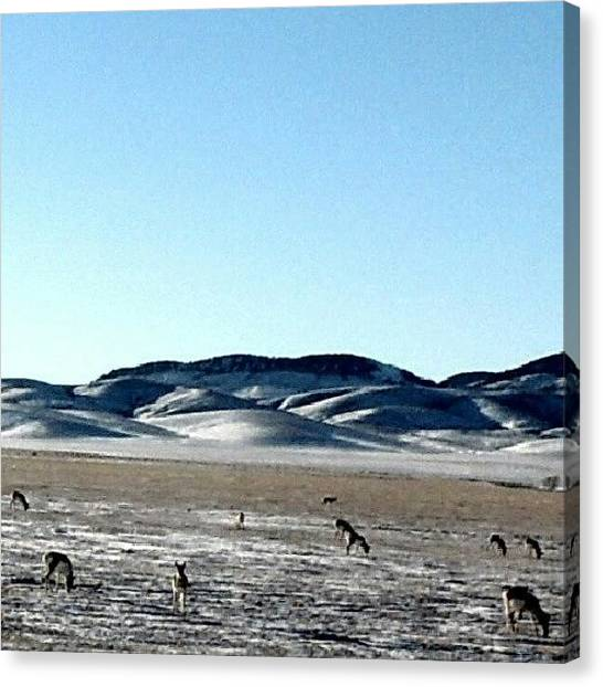 Trucks Canvas Print - Antelope Winterscape by Kelli Stowe